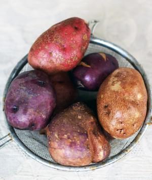 Blooming Glen Potatoes
